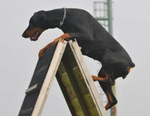 Home - Educazione Cinofila, addestramento cani, pavia e provincia